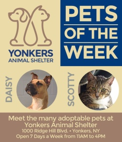 Pets-of-the-Week-6-9-2017